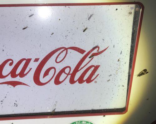 自動販売機に集まる虫