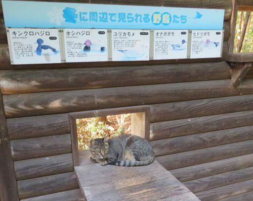 矢倉緑地の野良猫