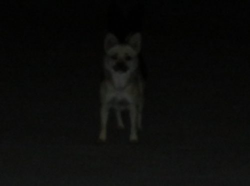 深夜の野良犬
