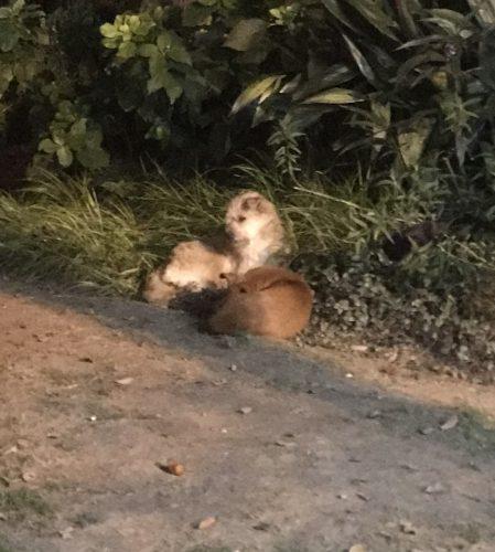 二匹の野良犬