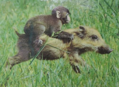 ウリ坊とニホンザルのミワちゃん