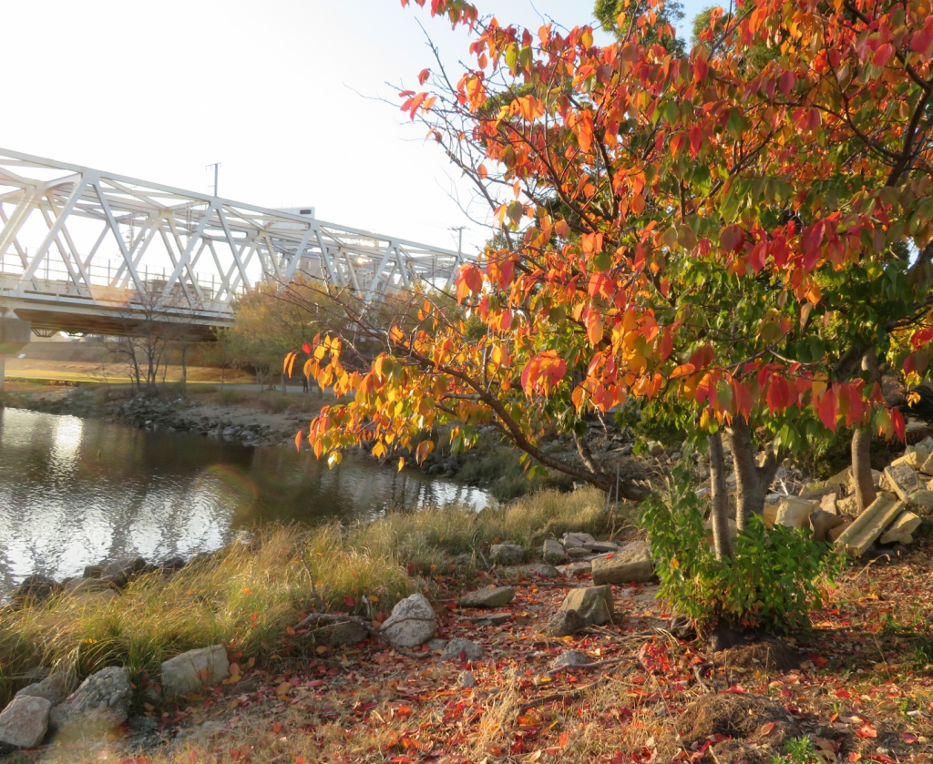 秋の淀川の風景