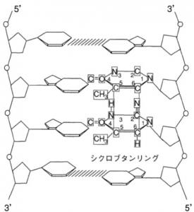 ピリミジン2量体